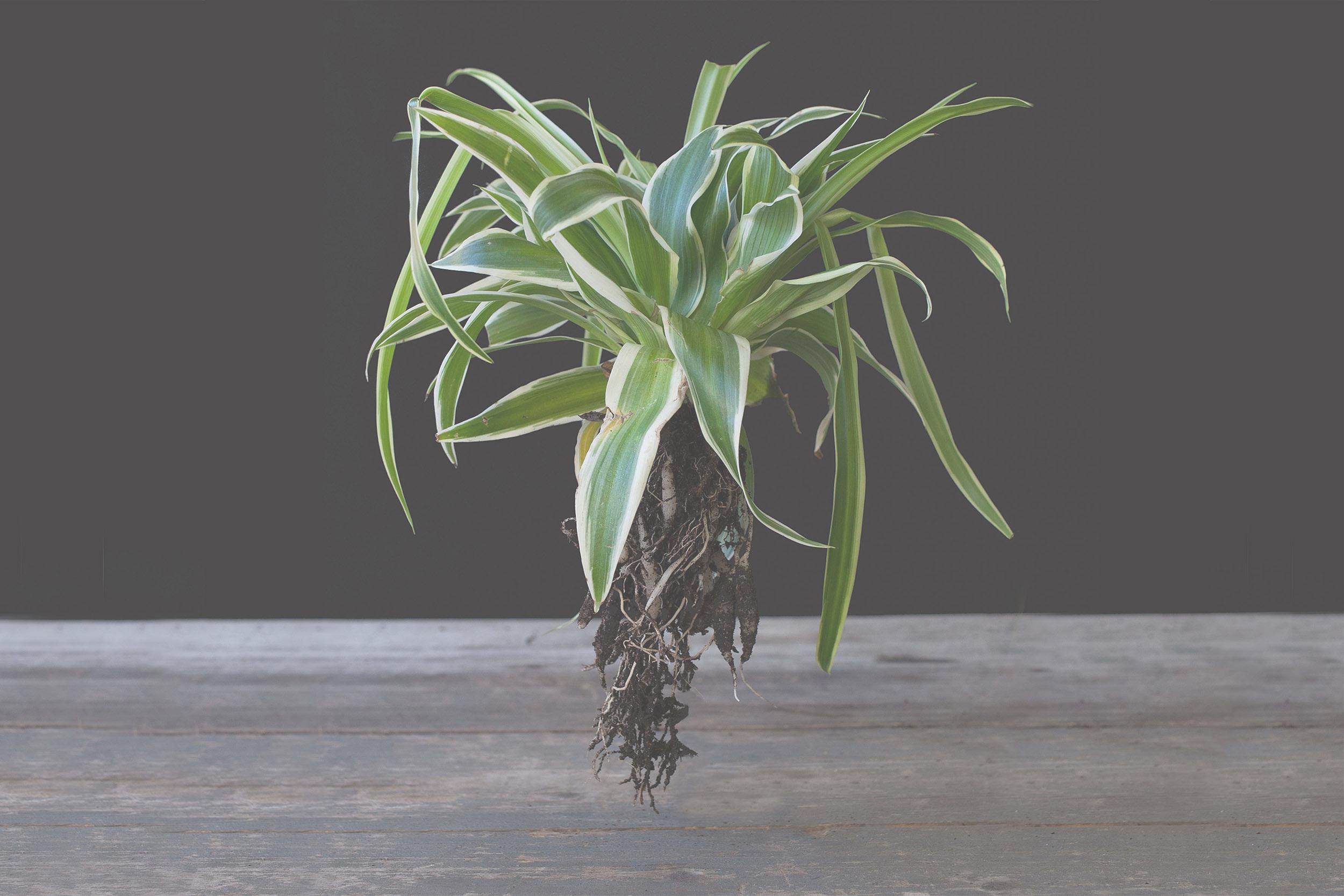 Isabelle-Palé-Photographe_crea-plantes_001A