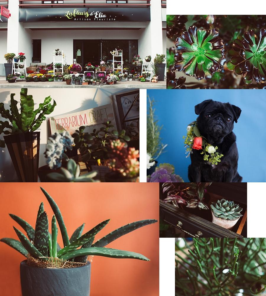 Elia-fleur-mariage-sare-photos-pays-basque-01-001002